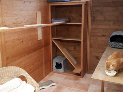 pension-katzen-garten-baumzimmer-003.jpg